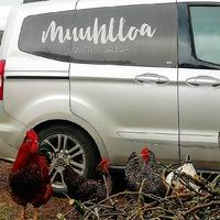 As nosas galiñas 🐓deséxanvos unha boa fin de semana.  Nuestras gallinas 🐓os desean un buen fin de semana.  #muuhlloa #milhulloa_coop #granxamaruxa #cosmeticakm0 #cosmeticagalega #cosméticaecológica #cosmeticacertificada #cosmeticarural